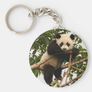 Young giant panda basic round button key ring