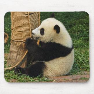 Young giant panda mouse mats