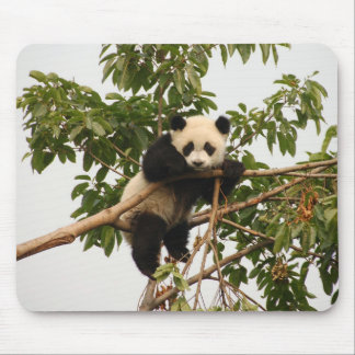 Young giant panda mouse pad
