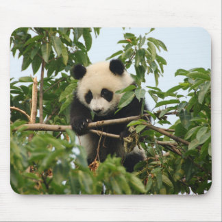Young giant panda mousepad