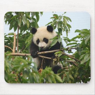 Young giant panda mousepad