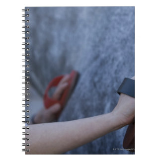 young girl brushing white horse 2 notebook