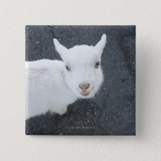 Young goat 15 cm square badge
