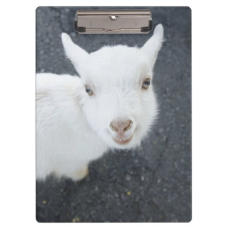 Young goat clipboard