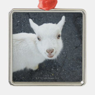 Young goat Silver-Colored square decoration