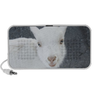 Young goat mini speakers