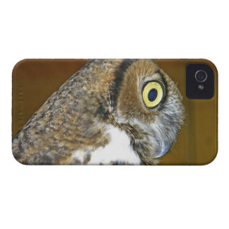 Young great horned owl indoors iPhone 4 cases