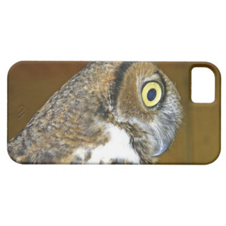 Young great horned owl indoors iPhone 5 cases