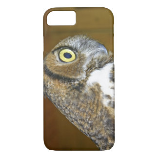 Young great horned owl indoors iPhone 8/7 case