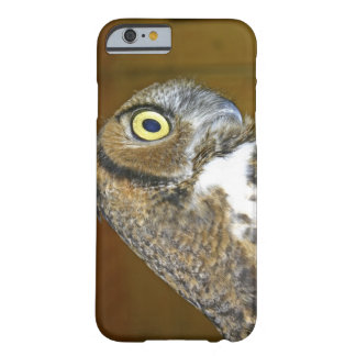 Young great horned owl indoors iPhone 6 case