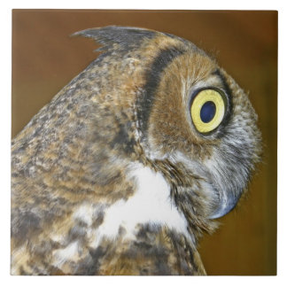 Young great horned owl indoors large square tile
