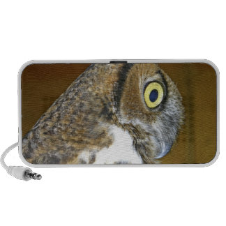 Young great horned owl indoors PC speakers