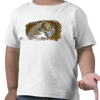 Young great horned owl indoors shirts