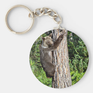 Young Grizzly Bear in a tree Keychains