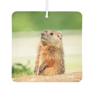 Young Groundhog Car Air Freshener