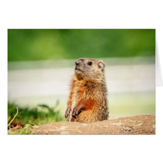Young Groundhog Card