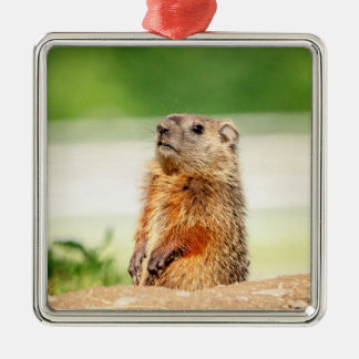 Young Groundhog Christmas Ornament