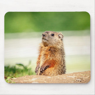 Young Groundhog Mouse Pad