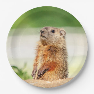 Young Groundhog Paper Plate