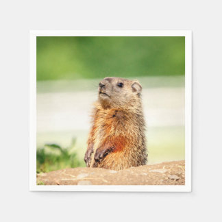 Young Groundhog Paper Serviettes