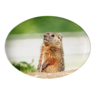 Young Groundhog Porcelain Serving Platter