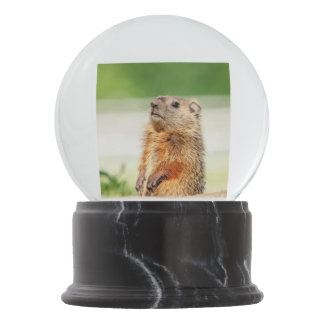 Young Groundhog Snow Globes