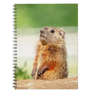 Young Groundhog Spiral Notebook