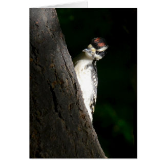 Young Hairy Woodpecker Card