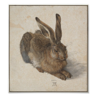 Young Hare by Albrecht Durer Poster