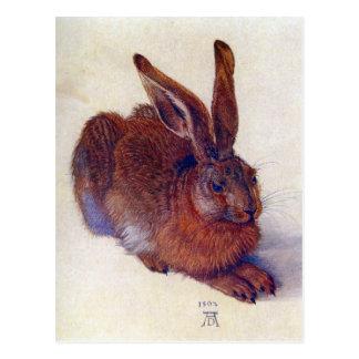 Young Hare by Albrecht Durer, Renaissance Art Postcard