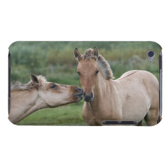 Young Henson horses encountering each other iPod Touch Case