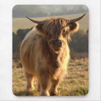 Young Highland Cow Mouse Mat