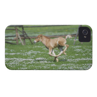 Young Horse Running Case-Mate iPhone 4 Case