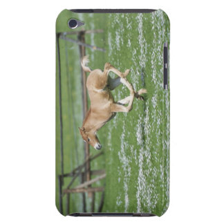 Young Horse Running iPod Touch Covers