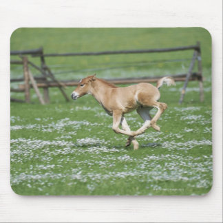 Young Horse Running Mouse Mat