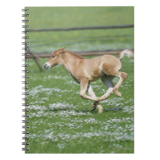 Young Horse Running Notebook