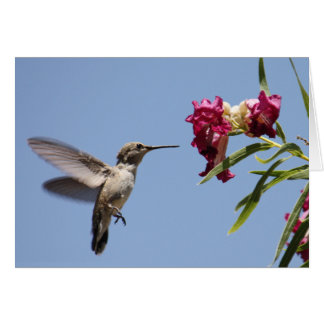 Young Hummer Greeting Card