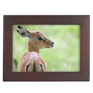 Young Impala (Aepyceros Melampus) Foal Portrait Keepsake Box