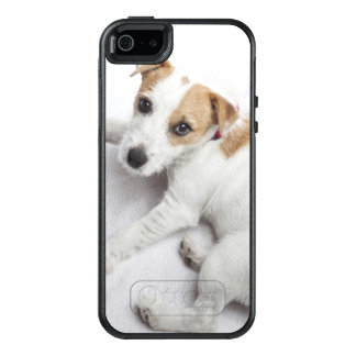 Young Jack Russell Terrier OtterBox iPhone 5/5s/SE Case