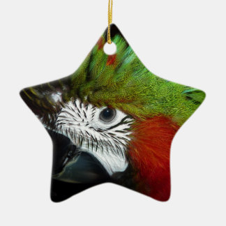 Young Jubilee macaw Christmas Ornament