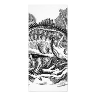 Young Largemouth Bass 10 Cm X 23 Cm Rack Card