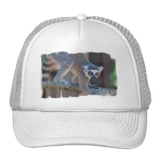 Young Lemur Baseball Hat
