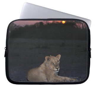 Young Lion at Sunrise Laptop Sleeve