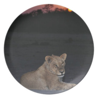 Young Lion at Sunrise Plate