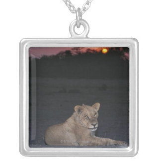 Young Lion at Sunrise Silver Plated Necklace
