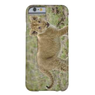 Young lion cub, Masai Mara Game Reserve, Kenya Barely There iPhone 6 Case