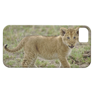 Young lion cub, Masai Mara Game Reserve, Kenya iPhone 5 Covers