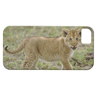 Young lion cub, Masai Mara Game Reserve, Kenya Case For The iPhone 5