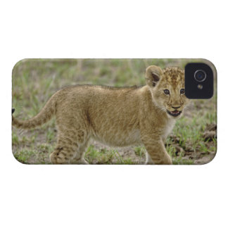 Young lion cub, Masai Mara Game Reserve, Kenya iPhone 4 Cover