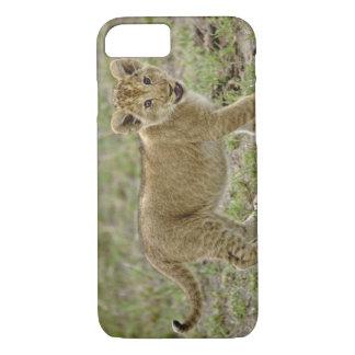 Young lion cub, Masai Mara Game Reserve, Kenya iPhone 7 Case